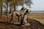 chesapeake retrievers